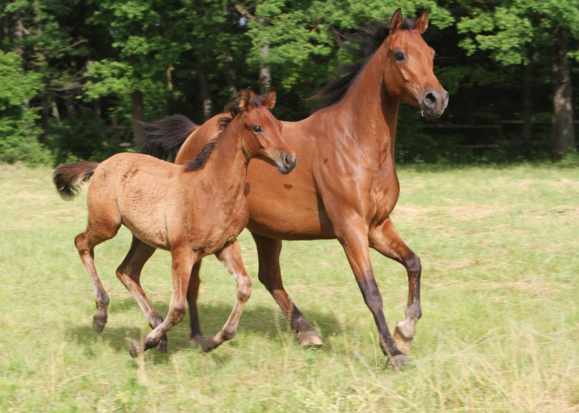 Рождение лошади. Зоопсихологические законы.